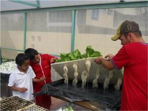 taller de hidroponía y agricultura sustentable (3)