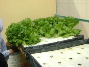 taller de hidroponía y agricultura sustentable (4)