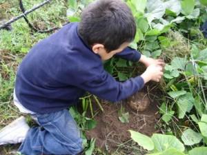 taller de hidroponía y agricultura sustentable (5)
