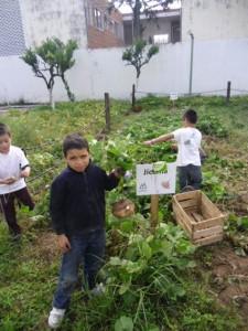 taller de hidroponía y agricultura sustentable (6)