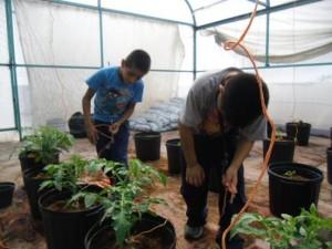 taller de hidroponía y agricultura sustentable (7)