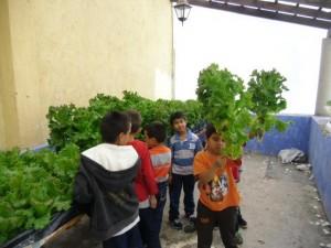 taller de hidroponía y agricultura sustentable